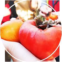 食 × 當季-預購當季新鮮食材、 食用無毒農村產品。