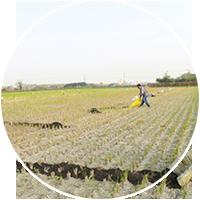 賞 × 故事-社區農村產物、 無毒安全食材。